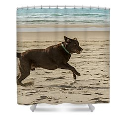 Name Something More Fun Than This Shower Curtain by Jean Noren