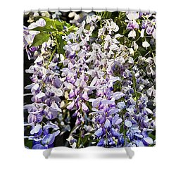 Nancys Wisteria Cropped Db Shower Curtain by Rich Franco