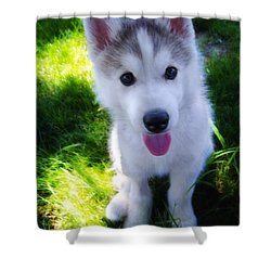 Nanook Of The North Shower Curtain by Bill Cannon