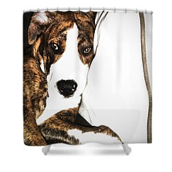 Shower Curtain featuring the photograph Nap Time by Robert McCubbin