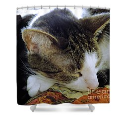 Nap Time Shower Curtain by Robyn King