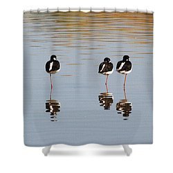 Nap Time Shower Curtain by Tom Janca