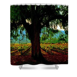 Napa Valley Winery Roadside Shower Curtain