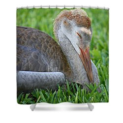 Napping Sandhill Baby Shower Curtain by Carol Groenen