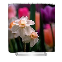 Narcissus And Tulips Shower Curtain by Rona Black