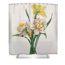 Narcissus Gouani Shower Curtain by Pierre Joseph Redoute