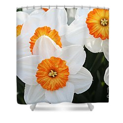 Narcissus Parkdene #2 Shower Curtain