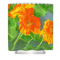 Nasturtiums Flowers Garden Small Oil Painting Shower Curtain by Elizabeth Sawyer