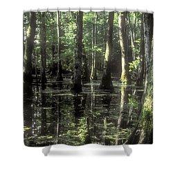 Natchez Trace Cypress Shower Curtain by Bob Phillips