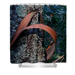 Shower Curtain featuring the photograph Natural Bands 1 by Evelyn Tambour