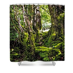 Natural Emeralds. I Wicklow. Ireland Shower Curtain by Jenny Rainbow