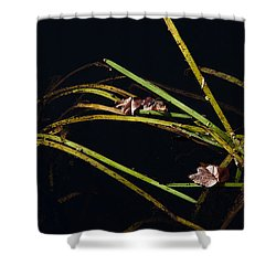 Nature Floats Shower Curtain by Karol Livote