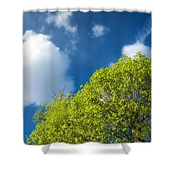 Nature In Spring - Bright Green Tree And Blue Sky Shower Curtain by Matthias Hauser