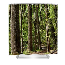Nature Walk Early Spring Shower Curtain by Rebecca Sherman