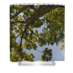 Nature Westchester County Ny Shower Curtain by Marianne Campolongo