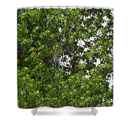 Nature's Art - Wellness Works Glendale - Face In The Tree  Shower Curtain