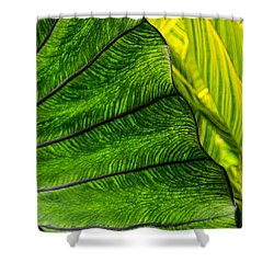 Nature's Artistry Shower Curtain by Jordan Blackstone