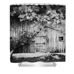 Natures Awning Bw Shower Curtain by Julie Hamilton