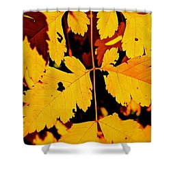 Nature's Designworks Shower Curtain by Ira Shander