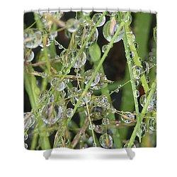 Natures Diamonds Shower Curtain by Susan Garren