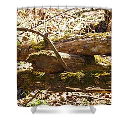 Shower Curtain featuring the photograph Natures Fence by Nick Kirby