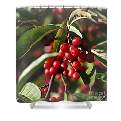 Natures Gift Of Red Berries Shower Curtain