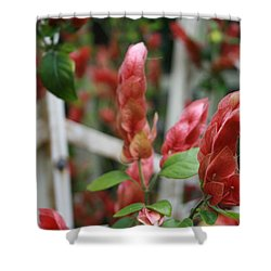Nature's Hearts Shower Curtain by Marian Palucci-Lonzetta