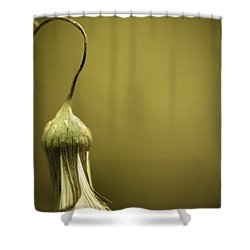 Nature's Little Lamp Shower Curtain