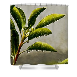 Natures Teardrops Shower Curtain by Carol F Austin