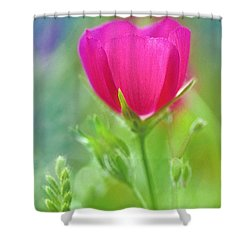 Shower Curtain featuring the photograph Natures Winecup South Texas by Dave Welling