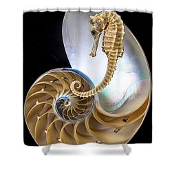 Nautilus With Seahorse Shower Curtain