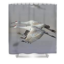 Neck N Neck Shower Curtain