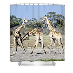 Shower Curtain featuring the photograph Necking Giraffes Botswana by Liz Leyden