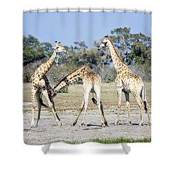 Necking Giraffes Botswana Shower Curtain