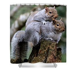 Fifty Shades Of Gray Squirrel Shower Curtain