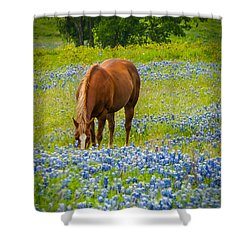 Nelly Grazing Among The Bluebonnets Shower Curtain
