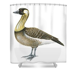 Nene Shower Curtain by Anonymous