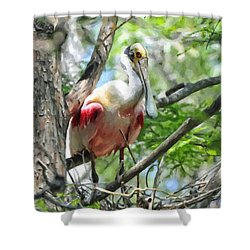 Nesting Roseate Spoonbill Shower Curtain