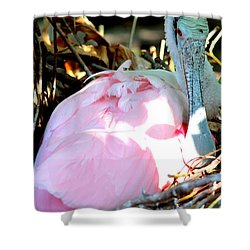 Nesting Spoonbill Shower Curtain by Carol Groenen