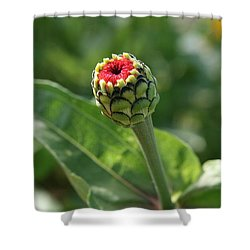 Shower Curtain featuring the photograph New Beginning by Neal Eslinger