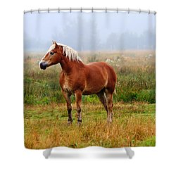 New Brunswick Horse Shower Curtain
