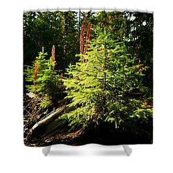 New Forest Shower Curtain by Jeff Swan