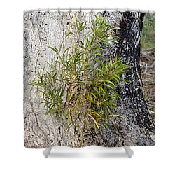 New Growth Shower Curtain by Steven Ralser