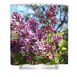 Shower Curtain featuring the photograph Purple Lilac by Eunice Miller