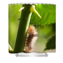 New Life Is Born Shower Curtain