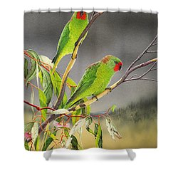 New Life - Little Lorikeets Shower Curtain