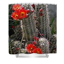 New Mexico Cactus Shower Curtain