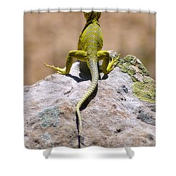 New Photographic Art Print For Sale Lizard Back Ghost Ranch New Mexico Shower Curtain
