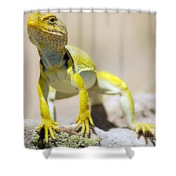 New Photographic Art Print For Sale Yellow Lizard Ghost Ranch New Mexico Shower Curtain