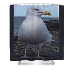 New Quay Gull  Shower Curtain